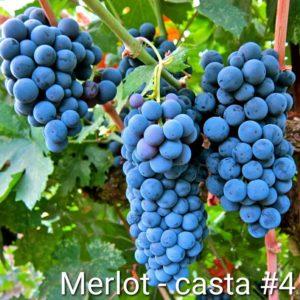 Casta #4 Merlot