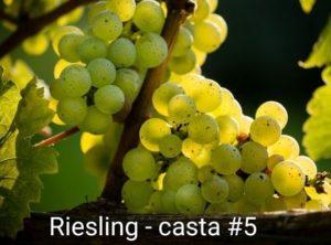 Série Castas – #5 Riesling